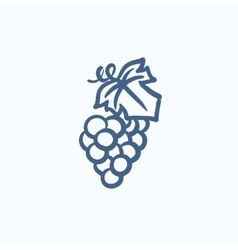 Bunch of grapes sketch icon vector