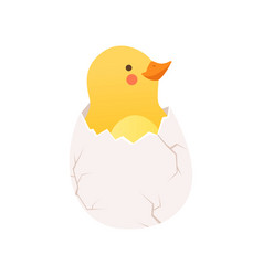 Cute baby chicken hatching funny cartoon bird vector