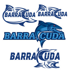 modern barracuda logo vector image
