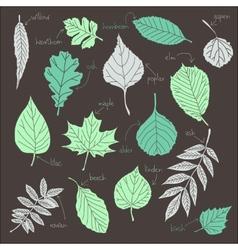 Set of leaves vector