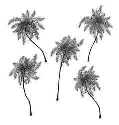 Set of stylized palm trees silhouettes vector