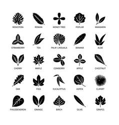 Useful properties leaves silhouette icons vegan vector