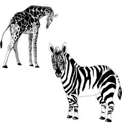 a giraffe and zebra vector image vector image