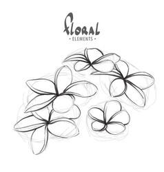 blooming thai flower vector image