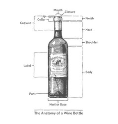 Hand drawn of a wine bottle vector