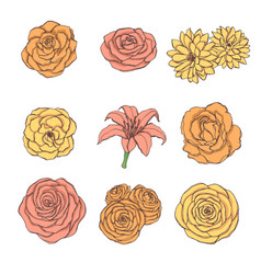 hand drawn set rose lily peony flowers vector image