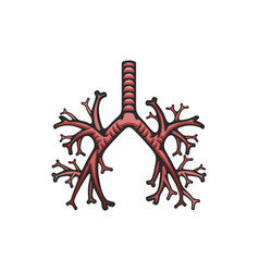 pulmonary trachea and bronchi icon lungs vector image