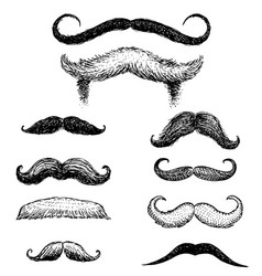 set of mustache and funny beard of men hipster vector image