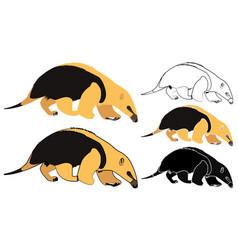 Anteater mirim in front view vector