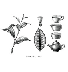 green tea collection hand drawing engraving style vector image