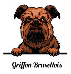 Head griffon bruxellois - dog breed color image vector