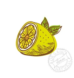 hand drawn lemon fruit vector image vector image