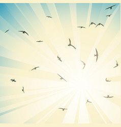 birds circling in rays of bright sun vector image