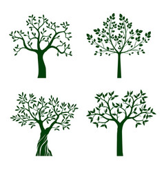 green shape tree with leaves vector image