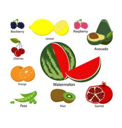 Set fruits on white isolated background vector