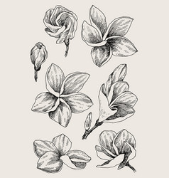 set hand drawn sketch tropical flower plumeria vector image