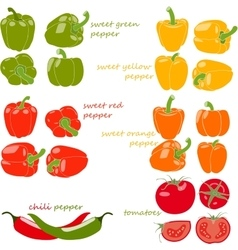 Set of vegetables with captions vector