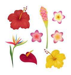 tropical flower set tropic flowers fashion print vector image