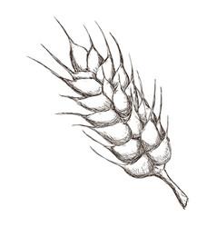 wheat food symbol vector image