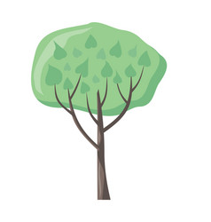 tree with green leaves green stylish plant vector image vector image
