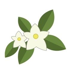 Jasmine flowers icon vector