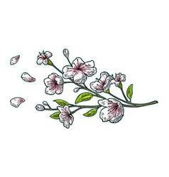sakura blossom cherry branch with flowers and bud vector image