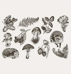 collection of highly detailed hand drawn fern vector image