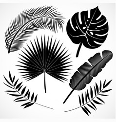 palm leaves silhouette set black vector image