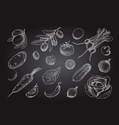 sketch style vegetables hand drawn collection vector image