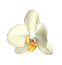 tropical orchid realistic isolated vector image