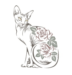 Cat sphynx vector