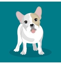 Bulldog breed design vector