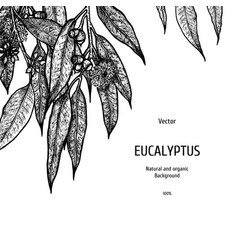 Hand drawn eucalyptus background herbal pattern vector