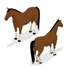 Western horse with saddle and bridle isometric vector