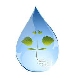 Tree sprout in water drop vector image