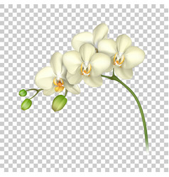 white orchid realistic transparent background vector image