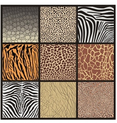 camouflage african animals vector image