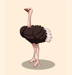 Cartoon a cute ostrich vector