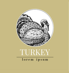 hand drawn turkey retro vector image