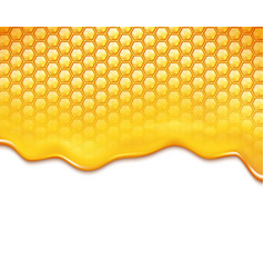 honeycomb and sweet honey drips vector image