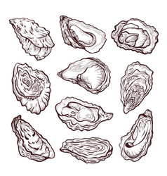 oyster sea shellfish sketch pencil drawing set vector image