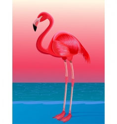 Red flamingo vector