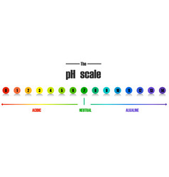 science ph scale template vector image