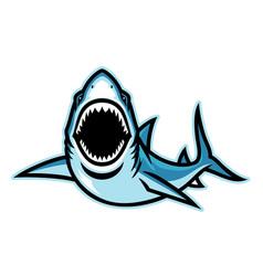 Angry attacking shark mascot vector