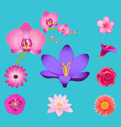 Flowers collection isolated on azure background vector