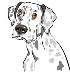 Dog dalmatian breed vector