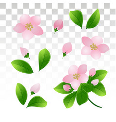 Branches flowering cherry or apple pink vector