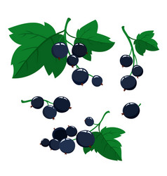 cartoon black currant berries with green leaves vector image