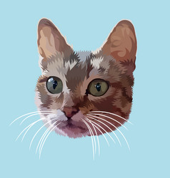 cat head isolated on blue background vector image