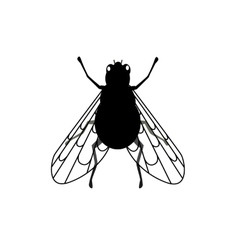 Fly Close-up with Transparent Wings vector